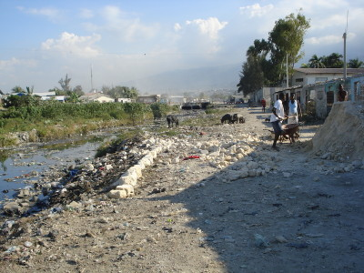 In the Cite Soleil slum in Haiti, animals and children share the same water.