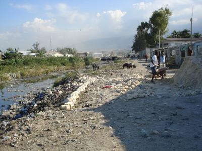 In the Cite Soleil slum in Haiti, animals and children share the same water.